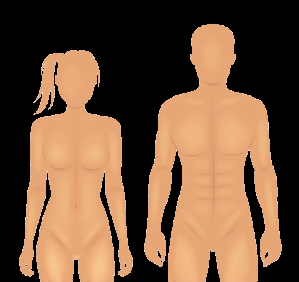 Het Relatiemodel beschrijft op eenvoudige manier wat een goede relatie is.